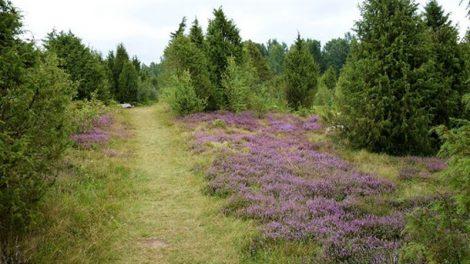Lietuva pritaria naujajai ES biologinės įvairovės strategijai