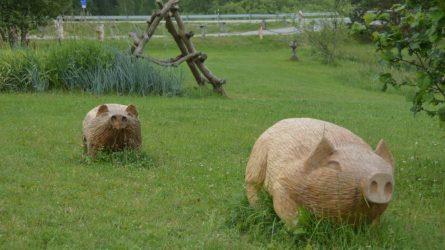 Kiaulių laikytojams bus kompensuotos įsigytos biologinio saugumo priemonės