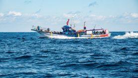 Parama žvejybos ir akvakultūros produktų perdirbimui