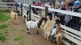Vaikai dalyvauja Šviečiamojoje  gyvulininkystės programoje