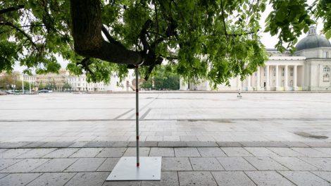 """Žalieji Vilniaus """"senjorai"""": sostinė rūpinasi brandžių medžių išsaugojimu"""