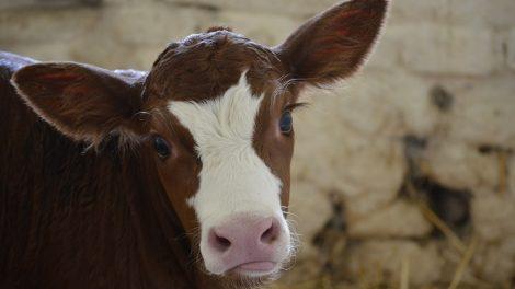 Pieno gamintojai kviečiami teikti paraiškas iki birželio 30 d.