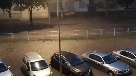Liūtis tvindė miesto gatves
