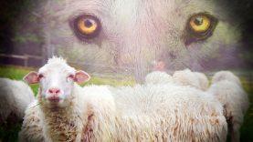 Ūkinių gyvūnų apsaugai nuo vilkų – beveik pusė milijono eurų