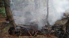 Miškuose pastaruoju metu itin padažnėjo gaisrų ir dėl žmonių elgesio