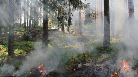 Miškininkai antrą dieną gesina miškus šalia Trakų – įtariami tyčiniai padegimai