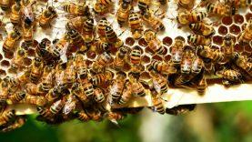 Kompensuos dalį išlaidų už papildomą bičių maitinimą