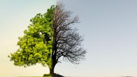 Klimato kaitos programai įgyvendinti – 170 mln. eurų biudžetas