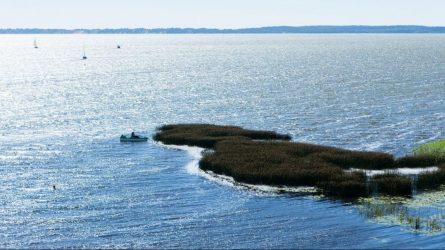 Siūloma uždrausti verslinę žvejybą Kuršių mariose žuvų migracijos ir neršto laikotarpiais