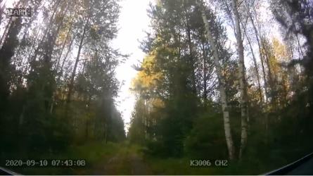 Naktį miške praleidęs grybautojas - surastas (video)