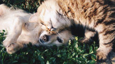 Siūloma ženklinti visus gyvūnus augintinius