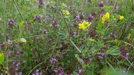 Laukinės floros ir faunos labui – įstatymų pakeitimai