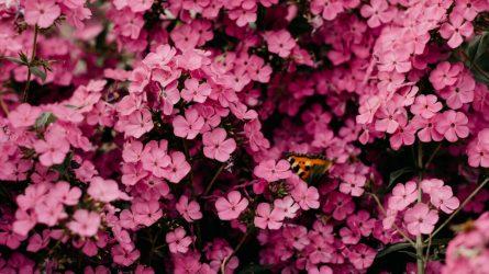 Laukia tolima kelionė? Gėlės gali nenuvysti!