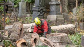 Bernardinų kapinėse tvarkomi avarinės būklės medžiai