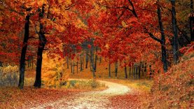 Jaunuolynų ugdymas – kelias į brandų mišką