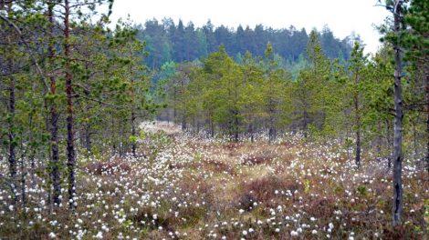 """""""Natura 2000"""" nauda valstybei – 105 mln. eurų kasmet"""