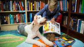 Į Kauno bibliotekas grįžta skaitymai su šunimi