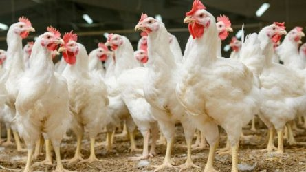 Nuo koronaviruso protrūkio nukentėjusiam paukštininkystės sektoriui – 12 mln. Eur