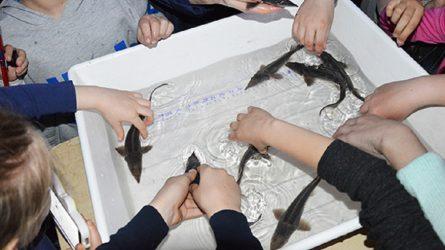 Pažintinė programa vaikus įtraukė į žuvininkystės pasaulį