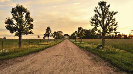Keliame vestuves sodyboje: smulkmenos, kurias turite žinoti