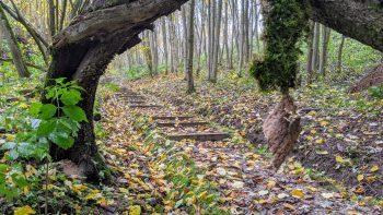 2 nauji pažintiniai takai Verkių ir Pavilnių regioniniuose parkuose