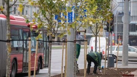 Kuriant žalesnį Vilnių: finišuoja rudeniniai medžių sodinimo darbai