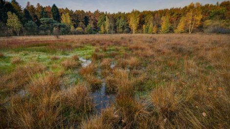 Pradėtas ikiteisminis tyrimas dėl Tauragės rajone suniokotos saugomos teritorijos