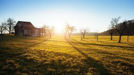 Kompensacinio PVM gavėjais galės tapti daugiau ūkininkų