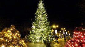 Kalėdų spindesys jau Skuodo mieste – įžiebta nuostabi Kalėdų eglė