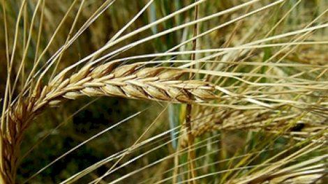 Apklausa parodė, kokioms rizikoms šiemet ruošiasi ūkininkai