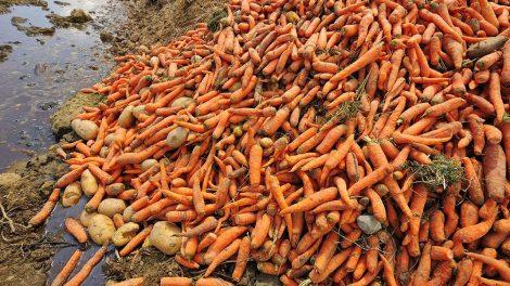 Žemės ūkio ministerija siekia užkirsti kelius maisto švaistymui