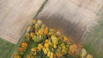 Klimato kaitos iššūkiai žemės ūkiui: dalis sprendimų – gamtoje