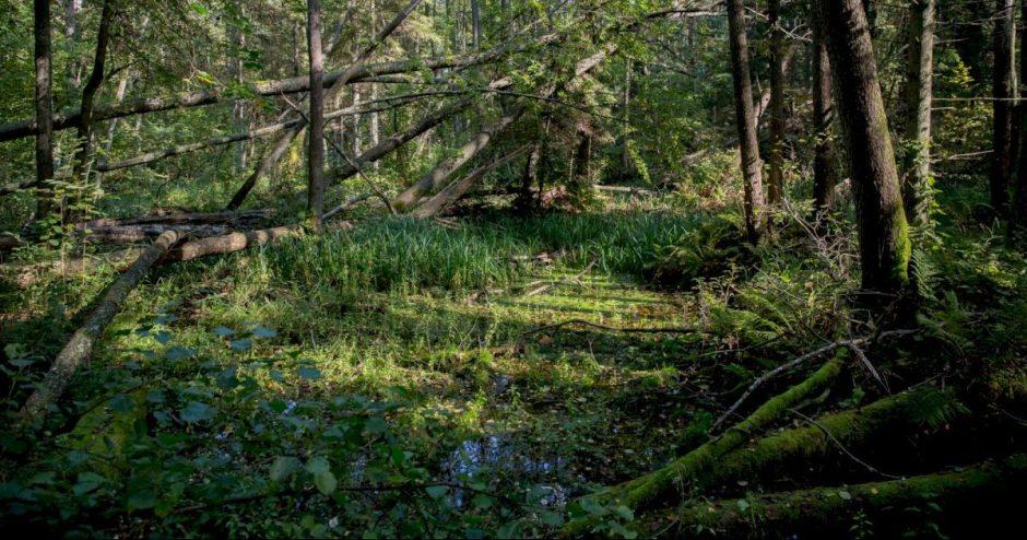 Ministerija siūlo, kaip apsaugoti natūralias buveines nuo plynųjų ir atvejinių miško kirtimų