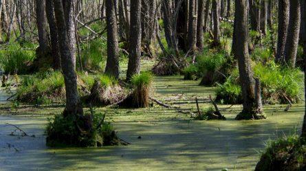 Pristatytos EB svarbos miško buveinių tvarkymo rekomendacijos