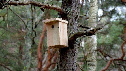 Iškelkime inkilus: sutikime grįžtančius paukščius
