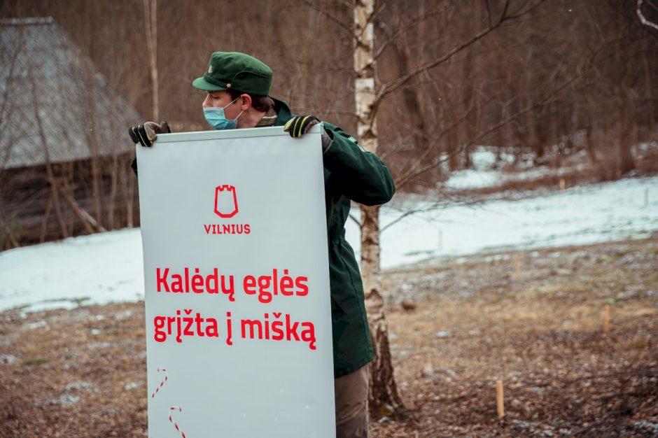 Vilniaus Kalėdų miškas – pirmas toks pasaulyje