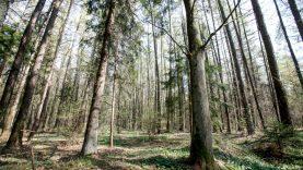 Nuogąstavimai dėl nepakankamos miškų kontrolės nepagrįsti: departamente dirbs daugiau pareigūnų