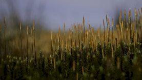 Prieš Velykas gamtininkai primena: viena nuskinta pataiso šakelė nusineša dešimtmečius besiformuojančią gyvybę
