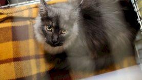 Katę vaikų akivaizdoje mušęs vyras atsipirko 50 eurų bauda, bet visi gyvūnai buvo konfiskuoti