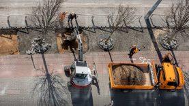 Žaliąsias alėjas Vilnius gina ir sankcijomis rangovams