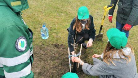 VASA mieste pasodino ąžuoliukus ir kviečia sostinės gyventojus kartu kurti žaliąjį Vilnių