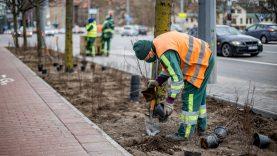 Metalines tvoras Vilniuje pakeis tūkstančiai krūmų