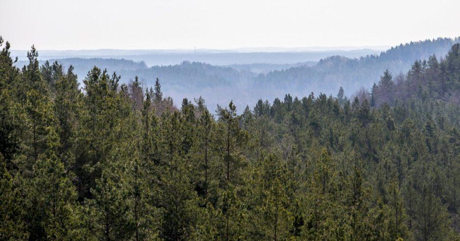 Nacionalinis miškų susitarimas įsibėgėja: kaip rasti sprendimus nugalint priešpriešą