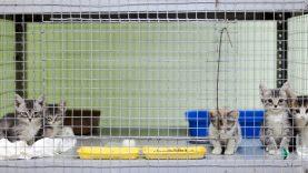 Bešeimininkių gyvūnų priežiūra perleista į kitas rankas – sudaryta sutartis su nauju paslaugų teikėju