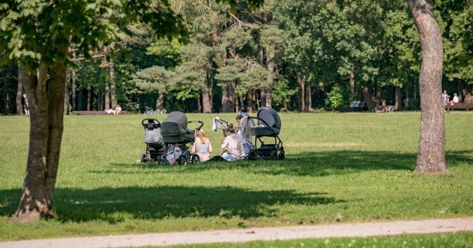 Vilnius kviečia pasirūpinti apsauga nuo erkių: miestuose fiksuojama daugiau susirgimų nei kaimuose