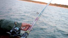 Sterkus šiemet bus galima žvejoti tik nuo birželio 1 dienos