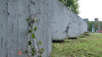 Naujas senas augalas Vilniuje – grafitininkų pamėgtas sienas miestas apsodins vijokliais