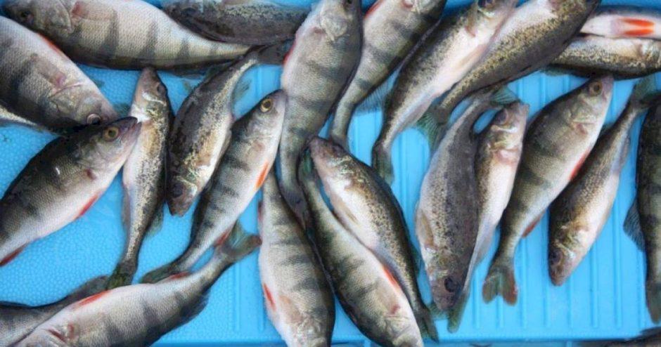 Nedėkime į lėkštes nykstančių rūšių žuvų – tausokime jų išteklius