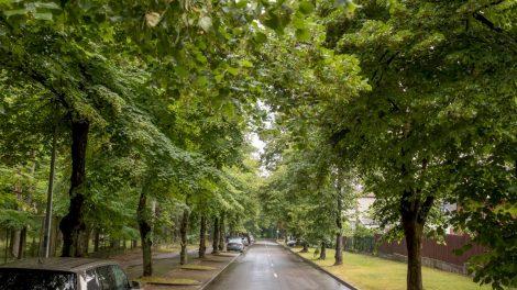 Vilnius gerina brandžių medžių priežiūrą