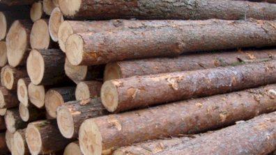 Medienos apskaitai išskaidrinti aplinkos ministras inicijuoja jos skaitmenizaciją